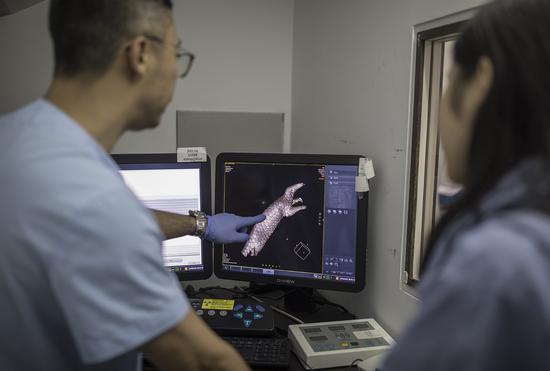 救护人员在观看穿山甲的CT影像。受访者供图