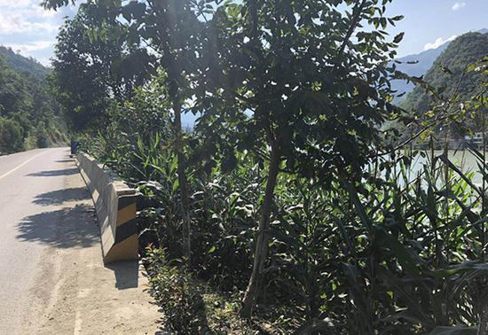 2016年3月15日,王维红开车途径国道212线麒麟寺水库时,从此处坠入水库身亡。家属供图