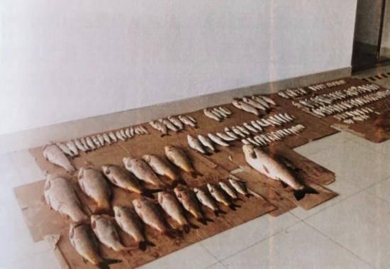 严惩!罚款、坐牢!两起长江电捕鱼案在南通如皋判决