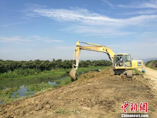 不符合标准的养殖池塘正在进行标准化改造。
