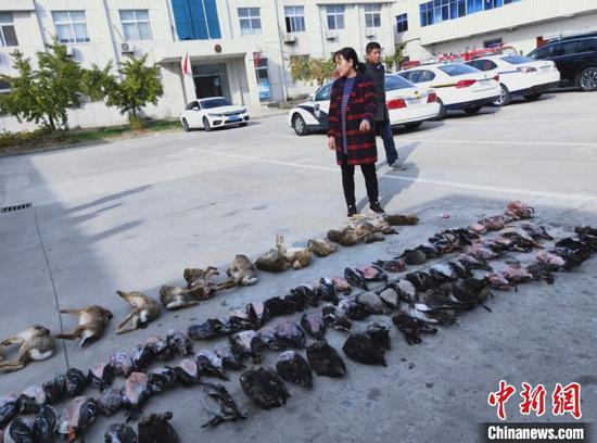 警方从销售窝点查获的候鸟死体。(志愿者供图)