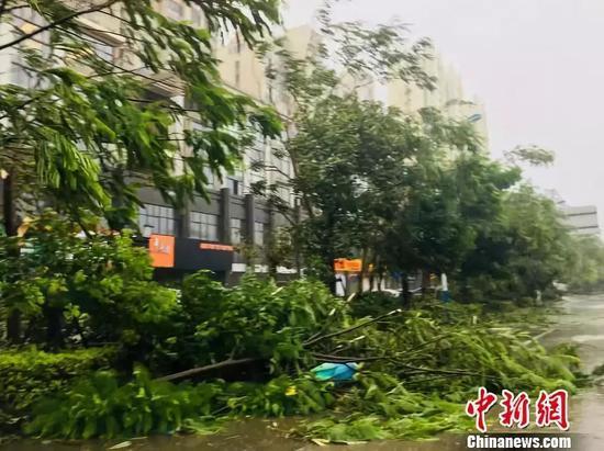 宁德市街道被吹倒的树木。吕巧琴 摄