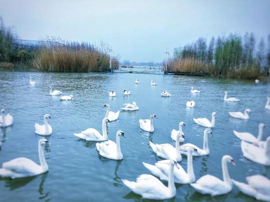 湿地天堂里私藏了全国最大鸟岛