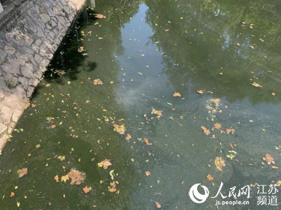 龙江河河水墨绿,水面上漂浮着五彩油花。