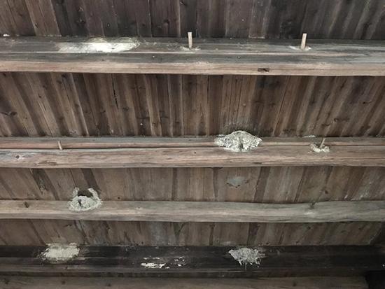 待拆房屋内的4个燕子窝