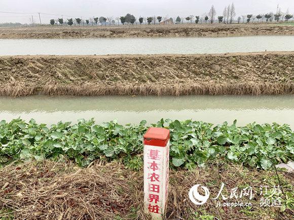 社渚镇不少虾塘占用的就是基本农田,基本农田的界桩形同虚设 马焘焘摄