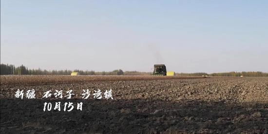 ▲ 中国棉花网新疆棉花调研视频截图