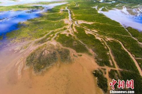 航拍盐城黄海滩涂湿地。 孙华金 摄