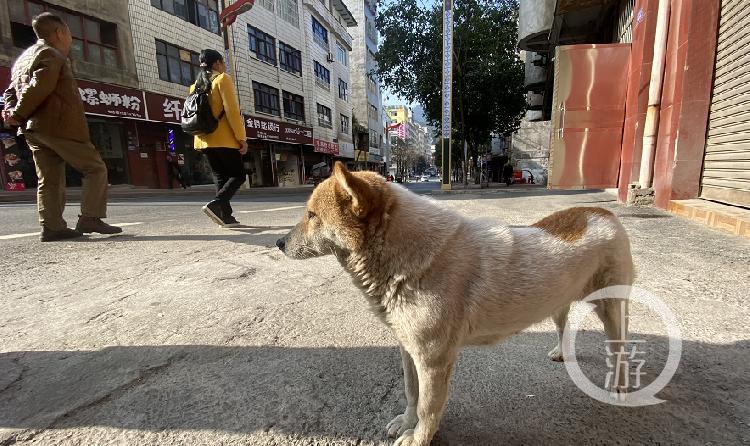 ▲威信县街头的流浪狗。摄影/上游新闻记者 胡磊