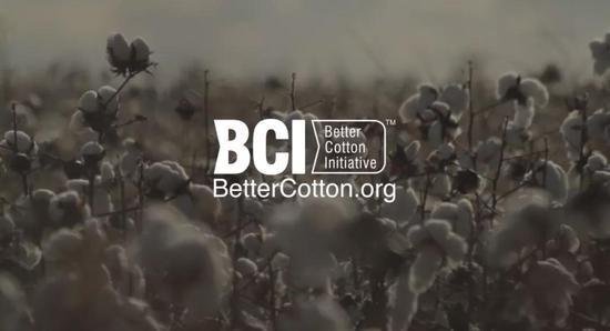 ▲ BCI官网