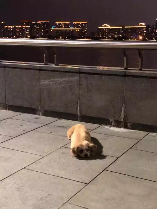 跑累了的小狗趴在地上休息 詹程开摄