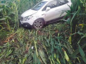 车冲进玉米地里,邢女士半昏迷近20个小时。新晚报 图
