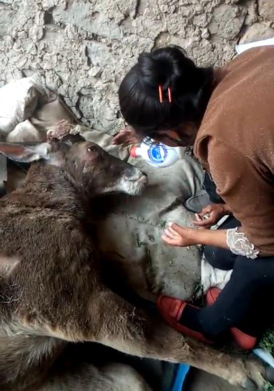 图片来自西藏林业信息网