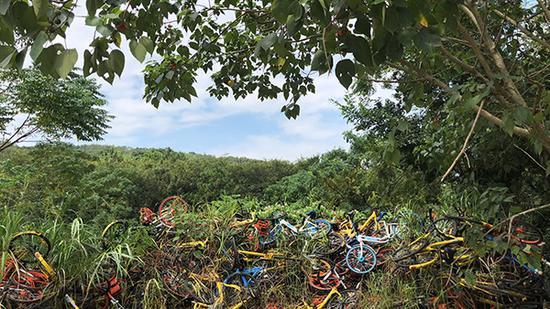五颜六色的单车,和蓝天白云绿树形成鲜明反差。