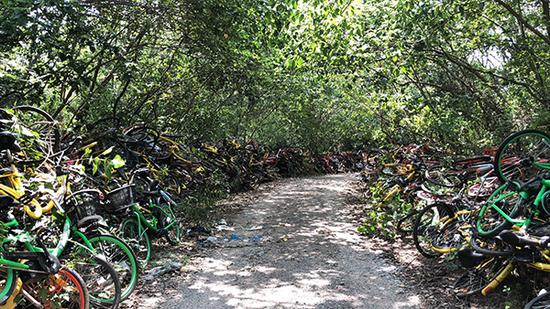 """""""单车墓道""""一直通往静龙山深处。"""