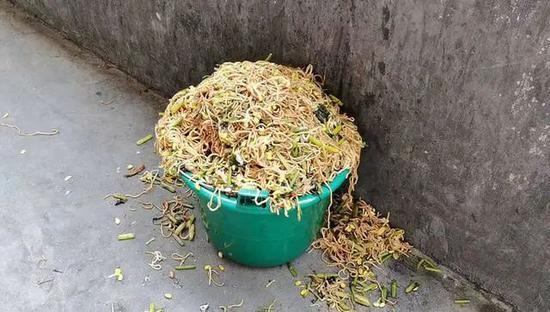 """官方回应""""小学营养餐溢出垃圾桶"""":特别难吃 两人被处理"""