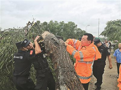 10日,东海县风雨交加、暴雨如注。236省道孔白段多棵行道树被吹倒,公路、交警部门及时除险。 李 娇摄 视觉江苏网供图