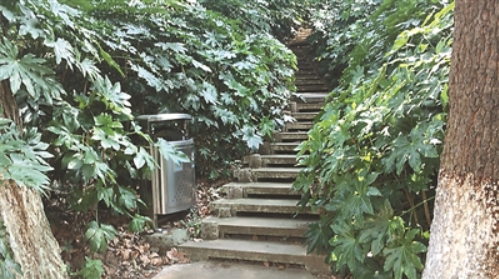 古林公园逼仄的登山道