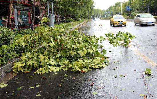 """8月13日,受台风""""摩羯""""影响,南京街头的道路上落有断枝和树叶。"""
