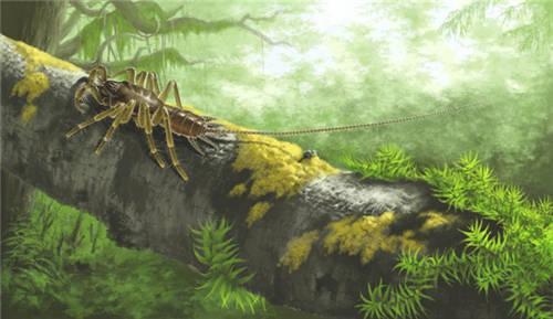 黄迪颖领衔的科研团队对应氏奇美拉蛛的生态复原图