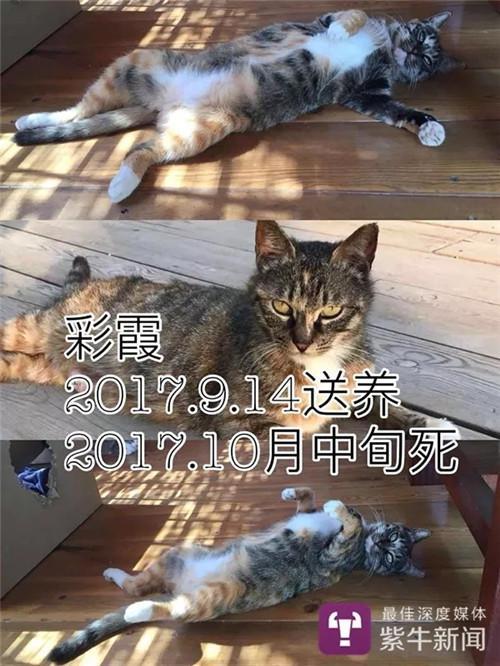 核对竟发现多只猫送给了同一人