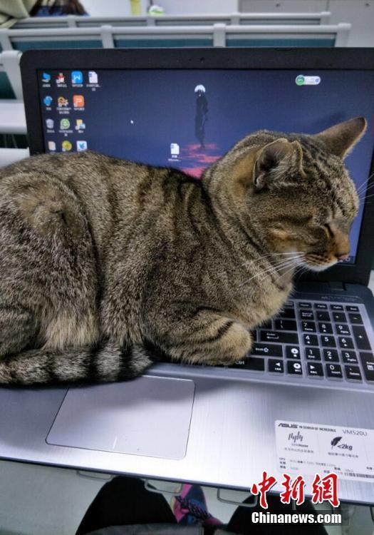 猫咪不仅出现在考场,也出现在晚自习的教室内。