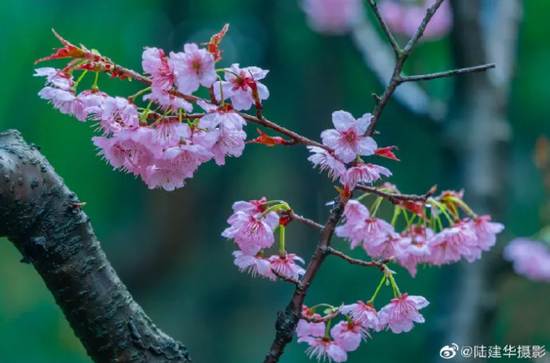 """【画里话外游江苏】跟着""""水韵江苏""""宣传片,在樱花下拥抱春天吧"""