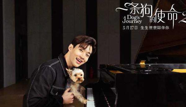 《一条狗的使命2》南京点映 被赞今夏最强催泪弹