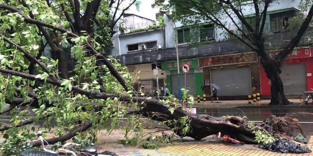 """强台风""""山竹""""肆虐广东 放倒树木 摧毁工棚"""