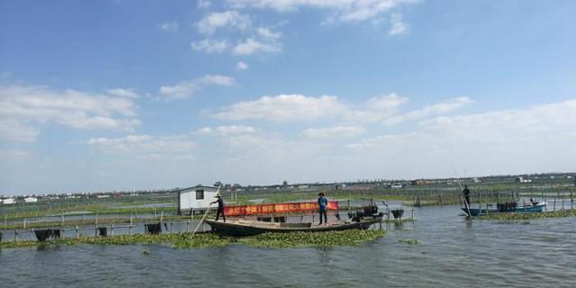 苏州连夜部署排查阳澄湖周边540家农家乐污染问题