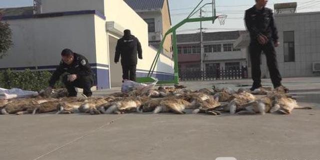用狗捕杀野兔子 六名涉案村民被抓