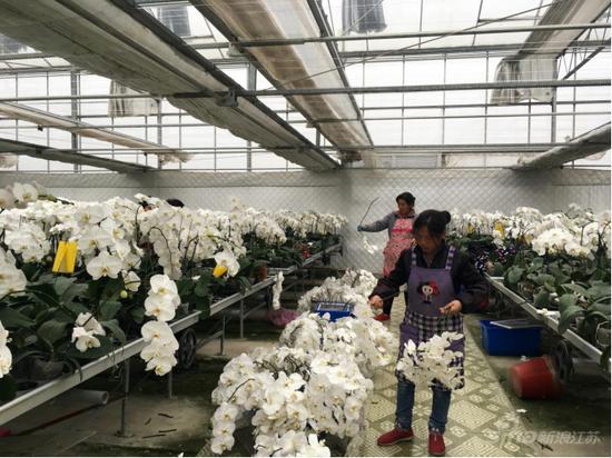 皇达花卉淮安生产基地