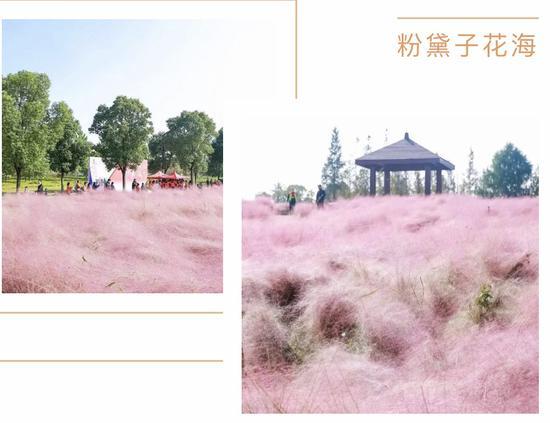 创新湖区,活力新城!2020吴江区第二届城市定向赛成功举行!今天,你奔跑了吗?