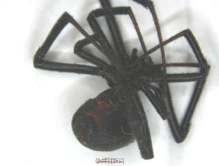 """""""黑寡妇""""蜘蛛。"""