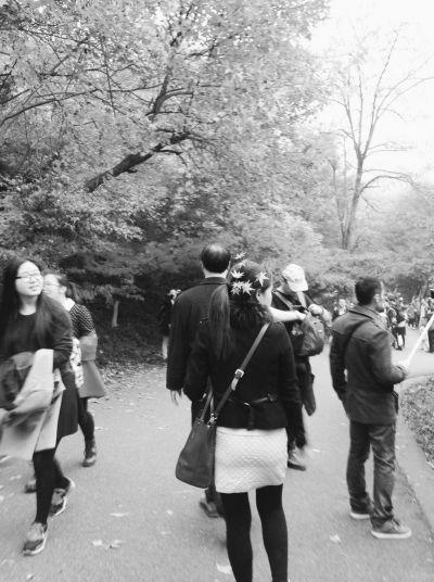 """一些游客把枫叶当成""""发饰""""戴在头上,甚至折下了枫树枝叶拿在手中。  李子俊摄"""