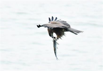 也列入中国国家二级保护野生动物名录