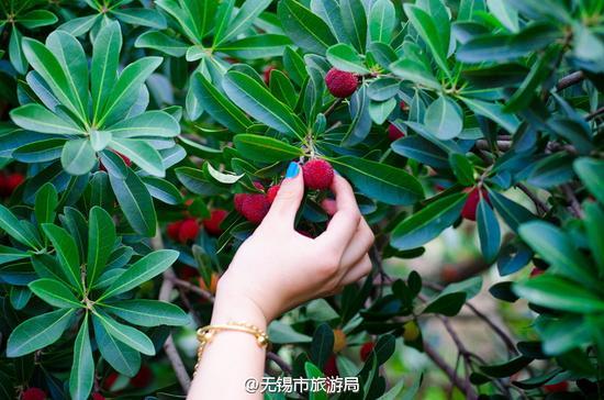 无锡亮河湾 边吃边采乐翻天(图/@无锡市旅游局)
