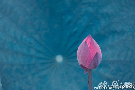 摄影:@望秋叹 玄武湖公园