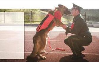 南京退伍消防战士带走搜救犬战友