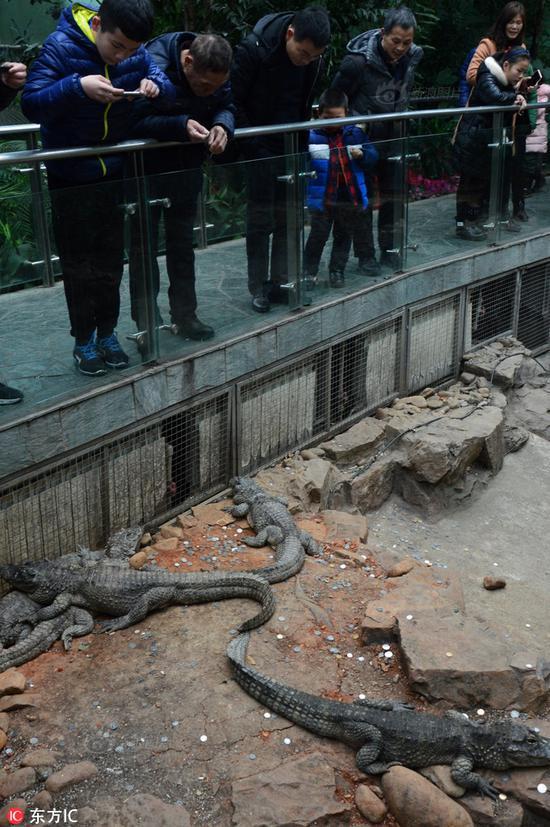 游客乱扔硬币 上海动物园鳄鱼池变许愿池
