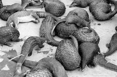 使食用受国家保护的野生动物的