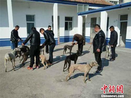 图为缴获的猎狗。(警方供图)