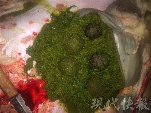图为杀羊时,烧烤店主在羊胃里发现了5个羊宝