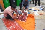 当街宰杀中华白海豚 珠海渔民或被追究刑责