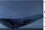 """迷恋""""蓝鲸""""自杀游戏 常熟17岁少年自残险送命"""