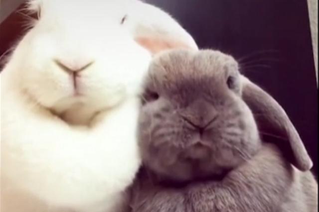 一只超级爱犯困兔子小公举