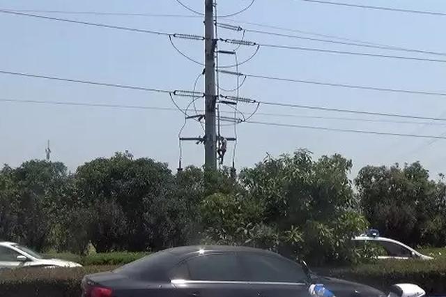 男子爬上电杆讨薪 致沿线8家企业被迫断电数小时