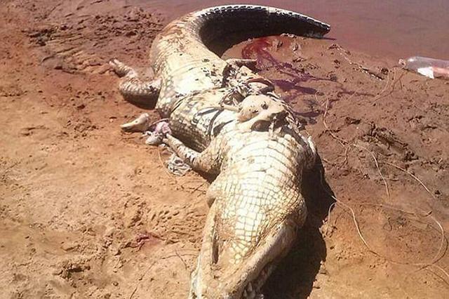 鳄鱼肚里找到人骨 为前日河边露营失踪男子