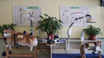诊所为宠物做针灸艾熏