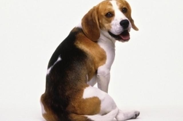 无锡女子骑车撞上宠物狗摔骨折 狗主人被判赔10余万